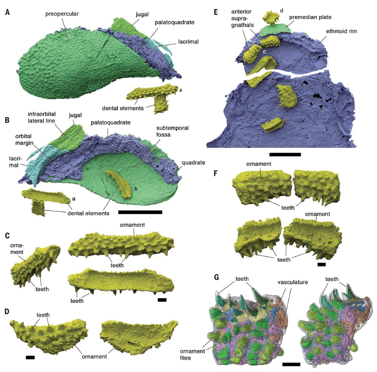 Забытая эволюция челюстей: от дунклеостея до человека - 6