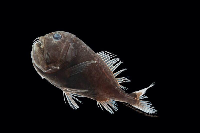 В черном-черном океане живет черная-черная рыба с альбедо кожи 0.5% - 2