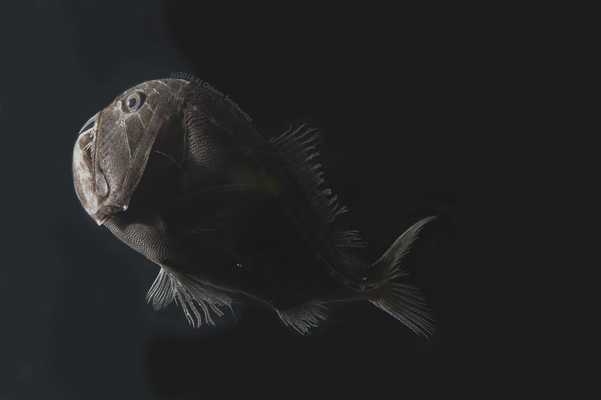 В черном-черном океане живет черная-черная рыба с альбедо кожи 0.5% - 3