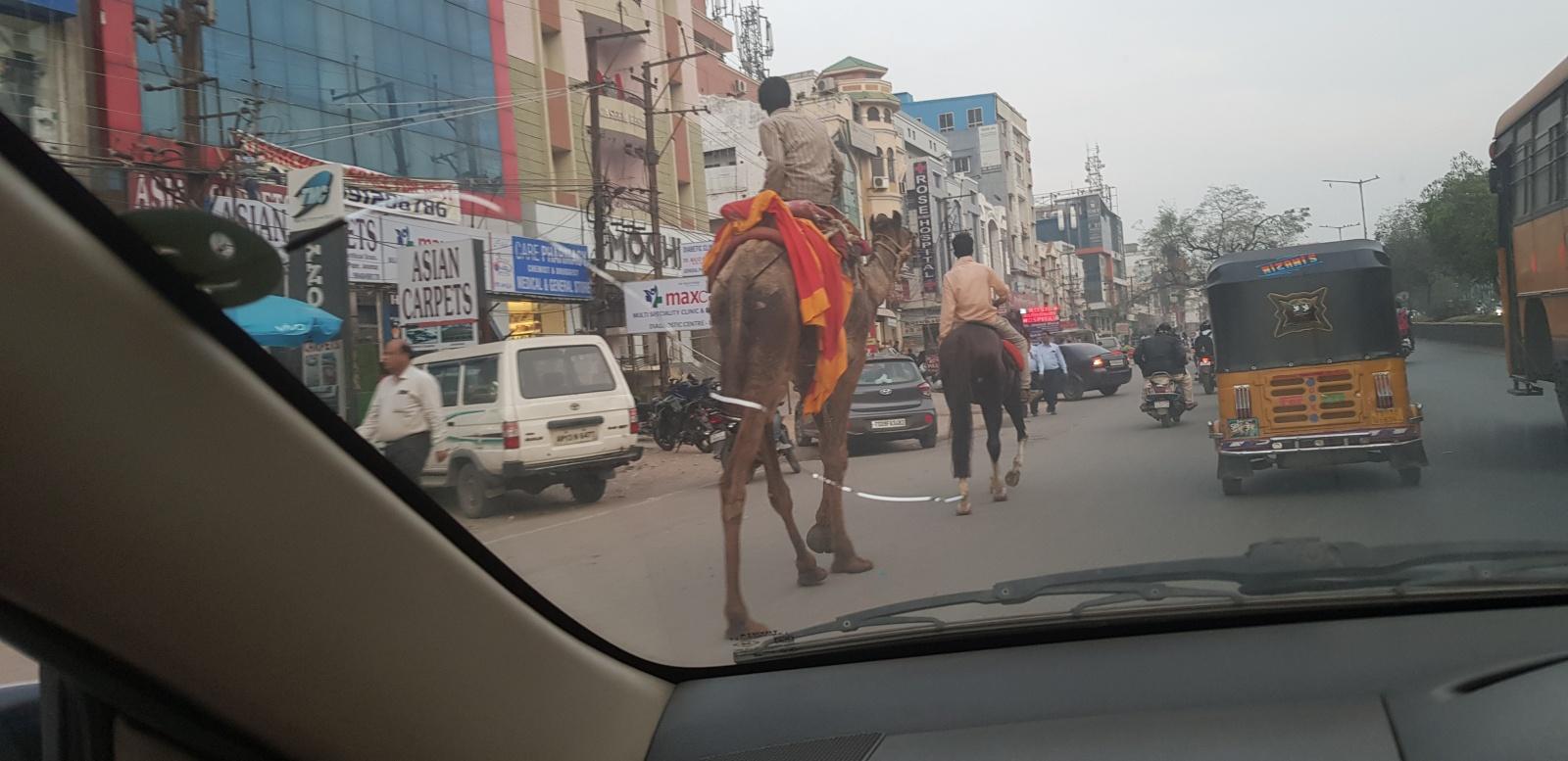 Как переехать в Индию всей семьей и не быть избитым палками на карантине - 6