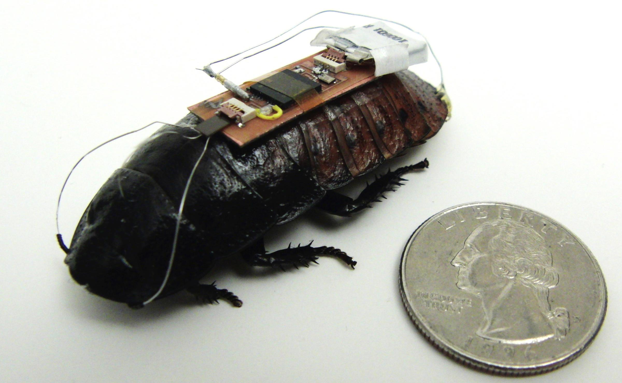 Будущее шпионажа. Беспроводная видеокамера на спине жука транслирует видео на 120 метров - 2
