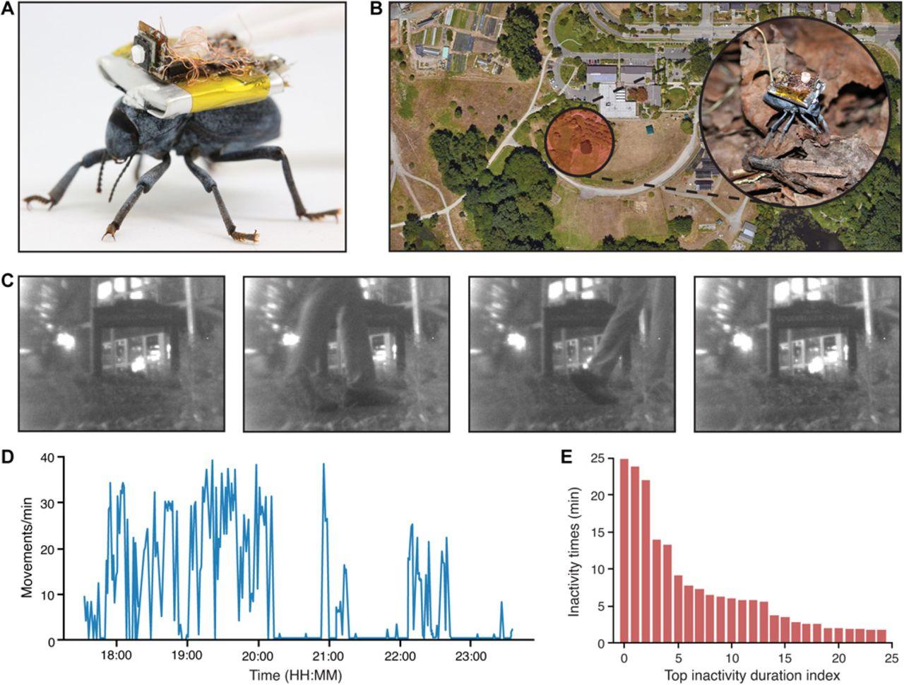 Будущее шпионажа. Беспроводная видеокамера на спине жука транслирует видео на 120 метров - 6