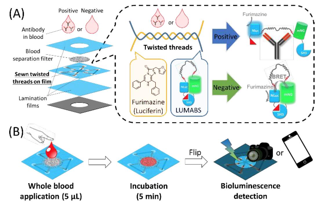 Хлопковая нить, биолюминесценция и смартфон: анализ крови на антитела за 5 минут - 2