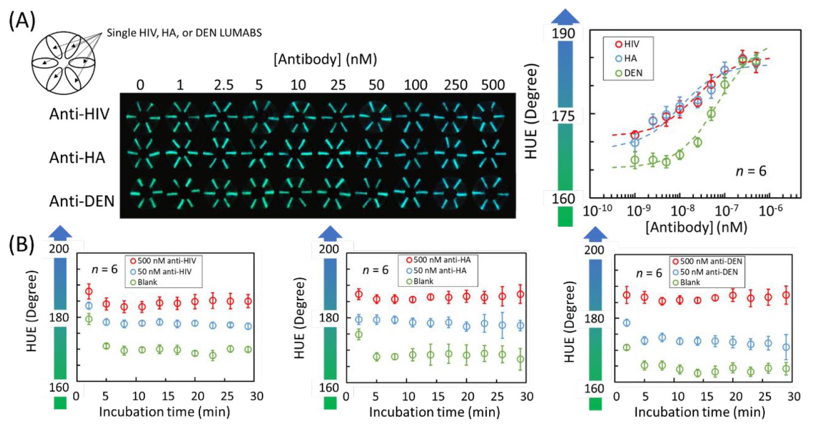 Хлопковая нить, биолюминесценция и смартфон: анализ крови на антитела за 5 минут - 5