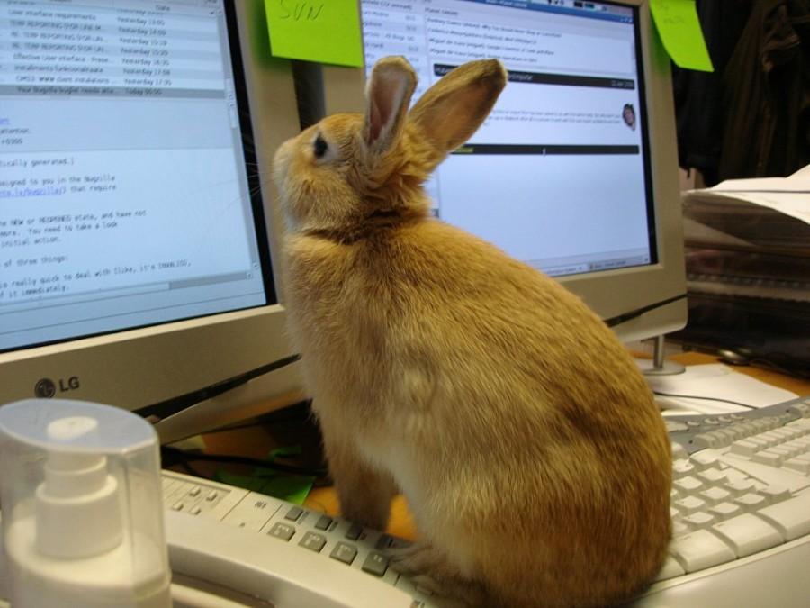 Лучший напарник для IT-шника или как кодеру подобрать себе домашнего питомца - 7