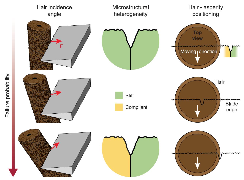 Почему лезвия бритвы затупляются после бритья? - 8