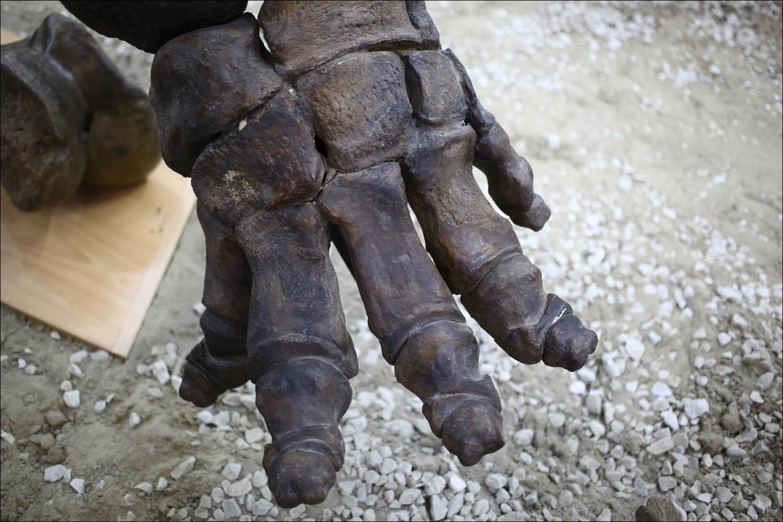 Россия — месторождение слонов - 11