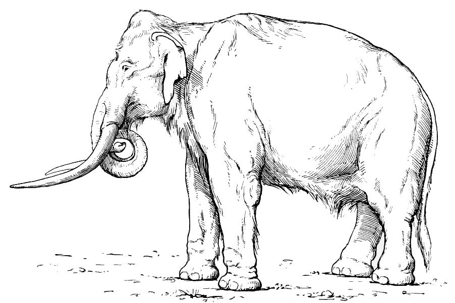 Россия — месторождение слонов - 2