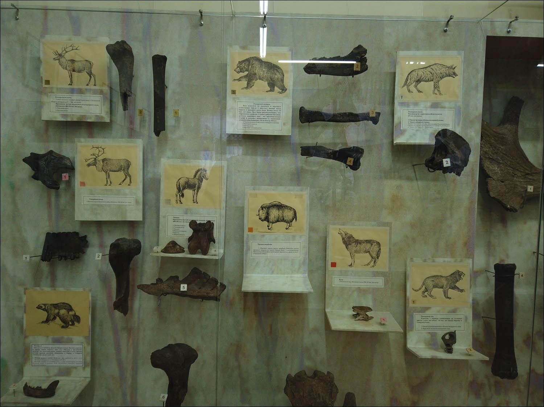 Россия — месторождение слонов - 7