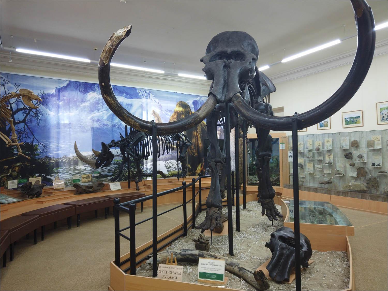 Россия — месторождение слонов - 9