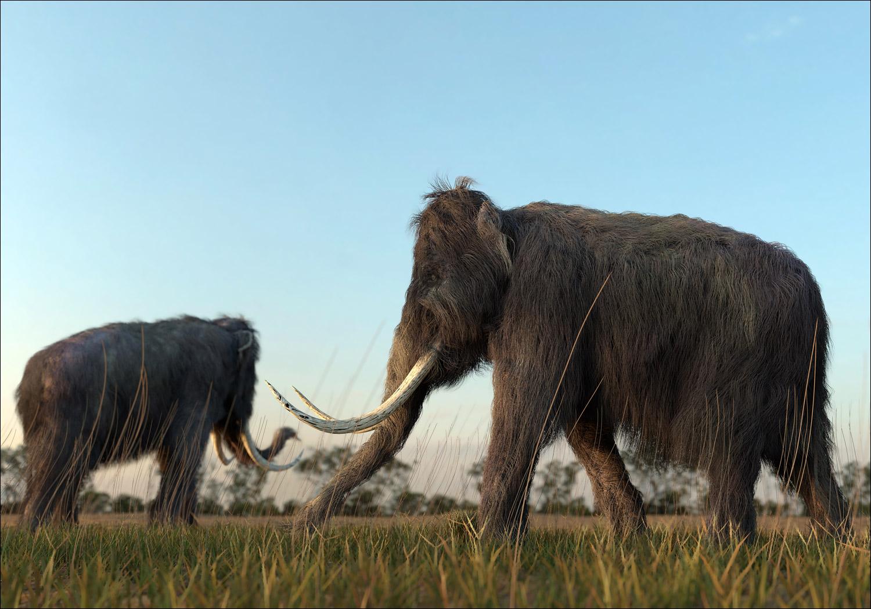 Россия — месторождение слонов - 1