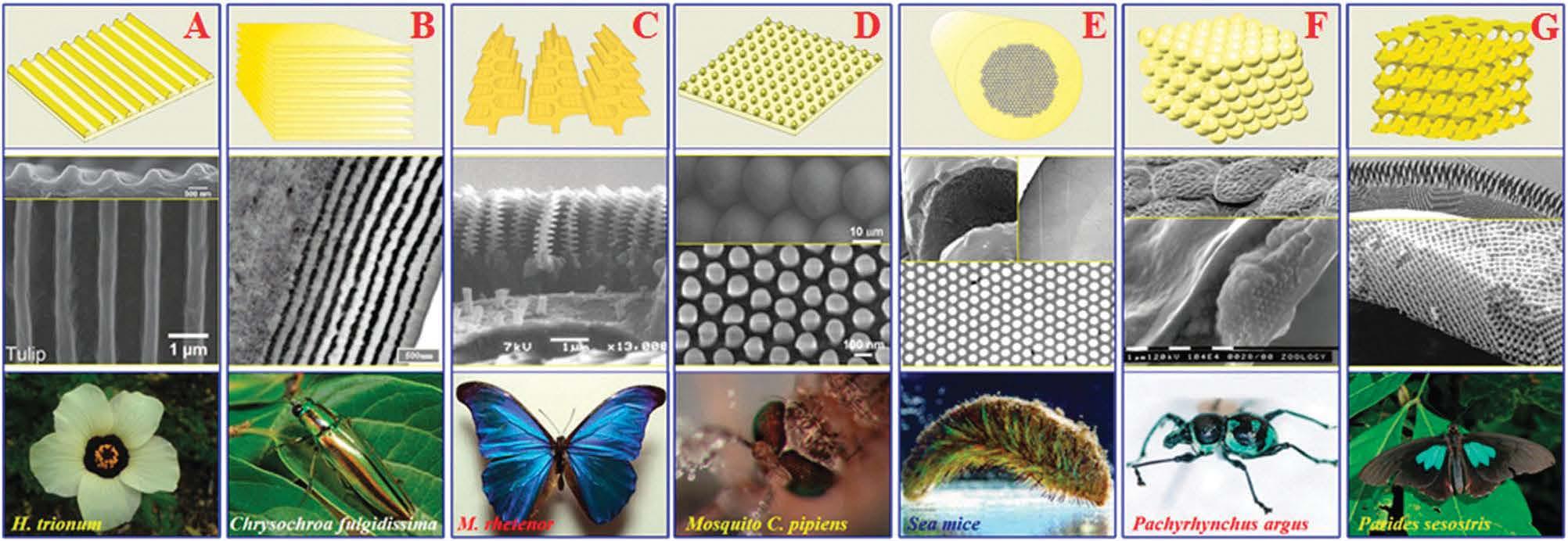 Оптика в ботанике: структурный цвет ягод калины тинус - 4