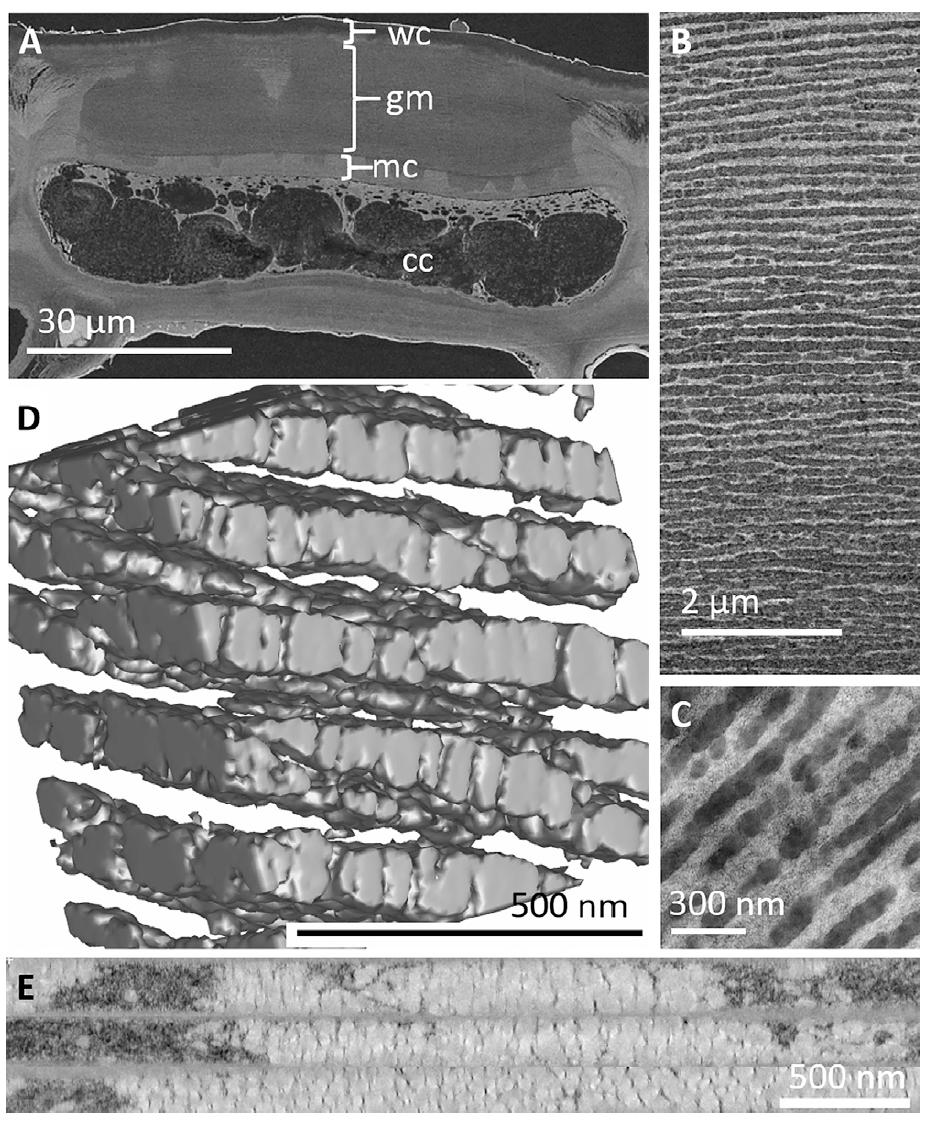Оптика в ботанике: структурный цвет ягод калины тинус - 6