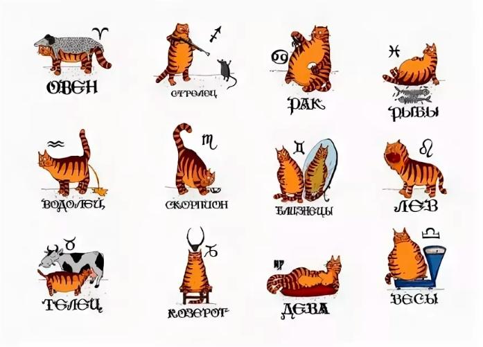 Уроки волшебства для кота, дейтинг для беременных и астрология - 11