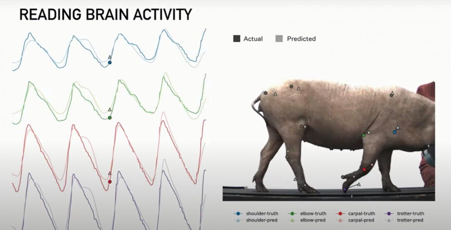 Слияние человека и машины. Neuralink - 8