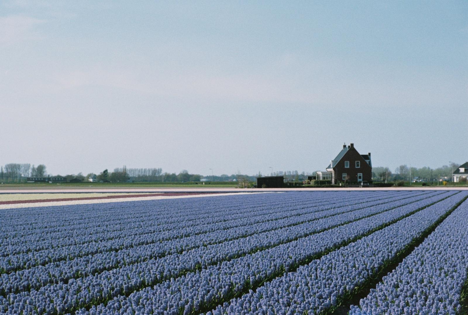 Переезд инженера в Нидерланды: рулинг, кеннисмигранты, стоимость жизни - 12