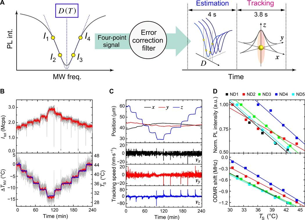 Квантовый нанотермометр: измерение температуры нематоды длиной 1 мм - 4