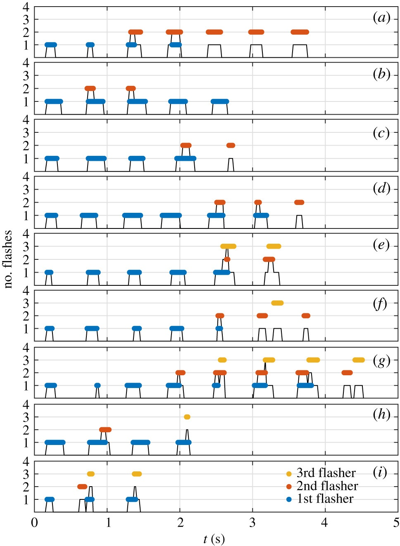 Танец света: секрет синхронизации светлячков - 11