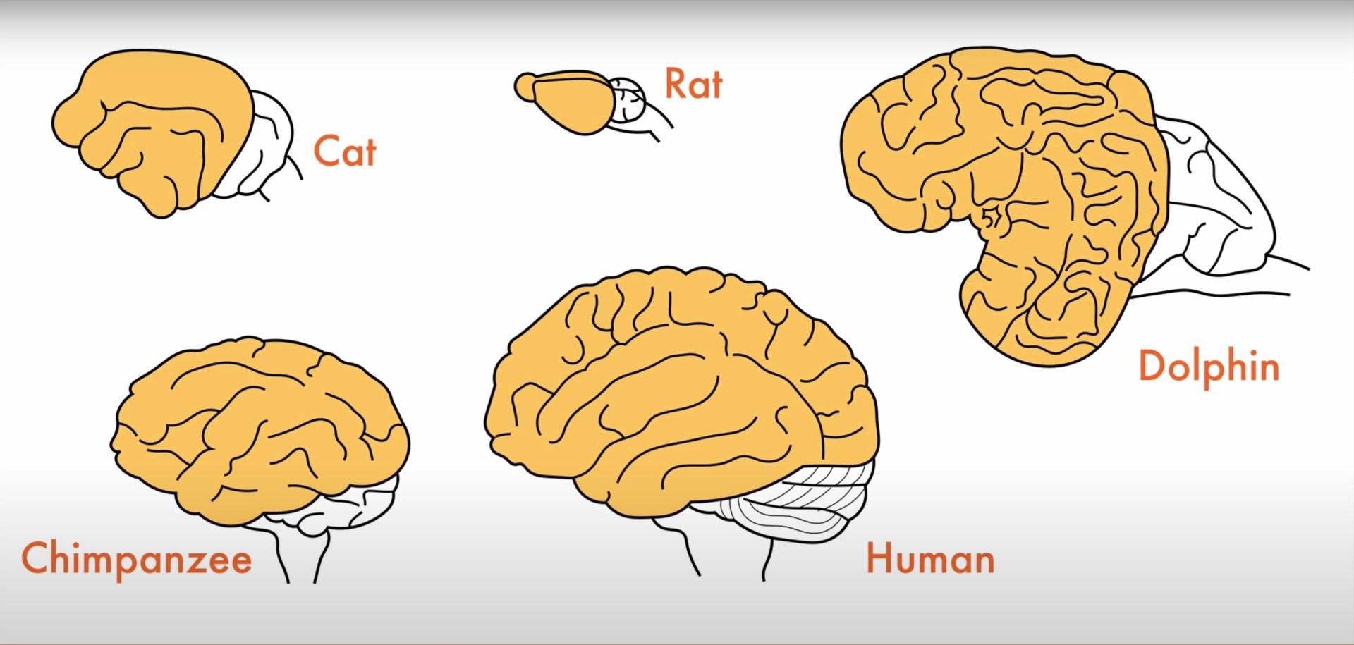 Что такое хорошо, что такое плохо: будет ли совесть у искусственного интеллекта - 3