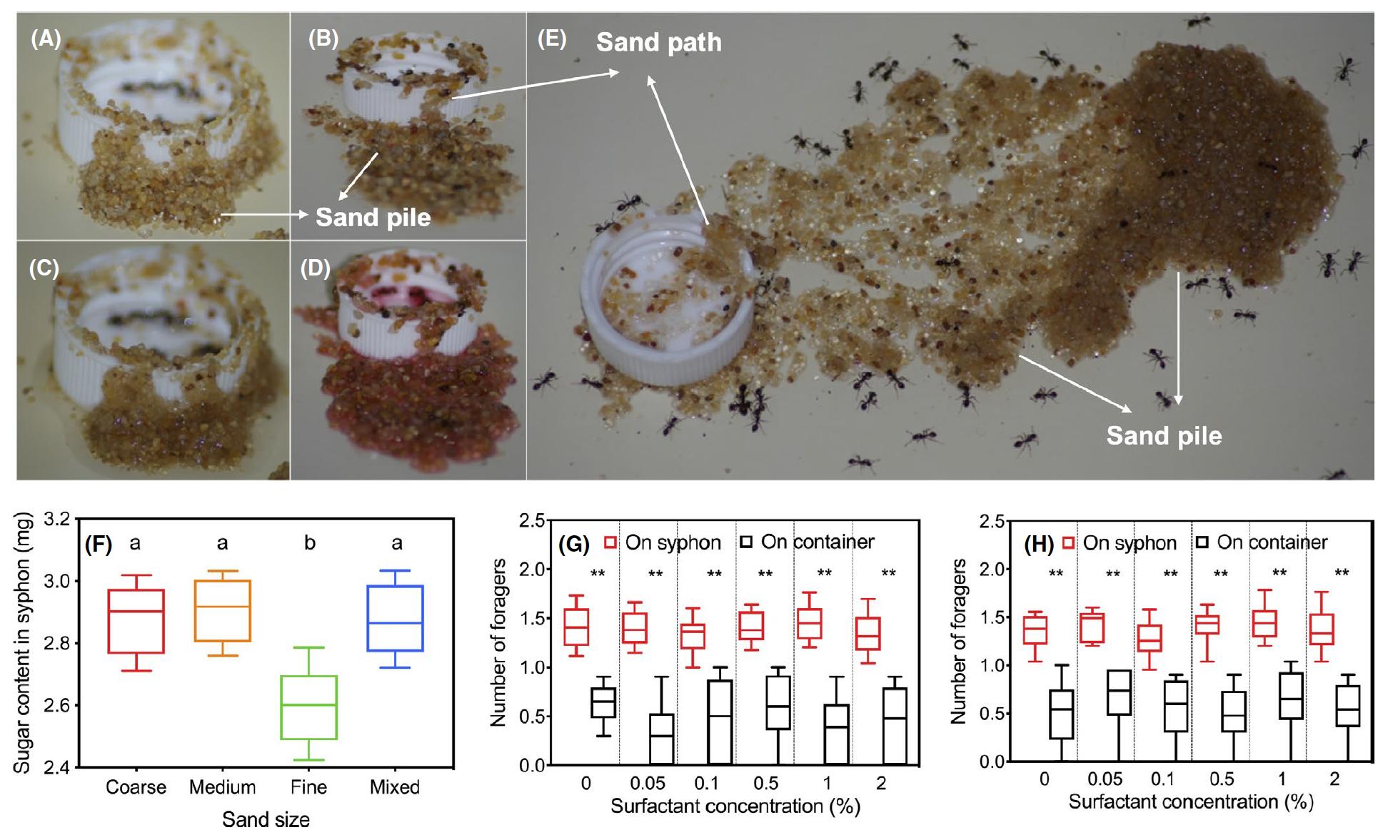 Инженерия для муравьев: как не утонуть в сиропе - 8