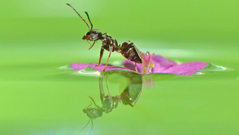 Инженерия для муравьев: как не утонуть в сиропе - 1