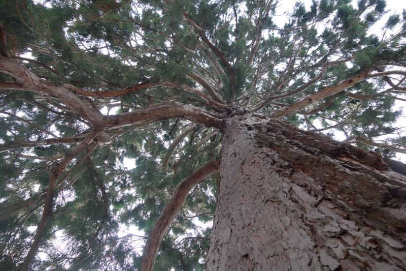 Вышел пакет Sequoia 0.20.0, реализация OpenPGP на Rust - 1