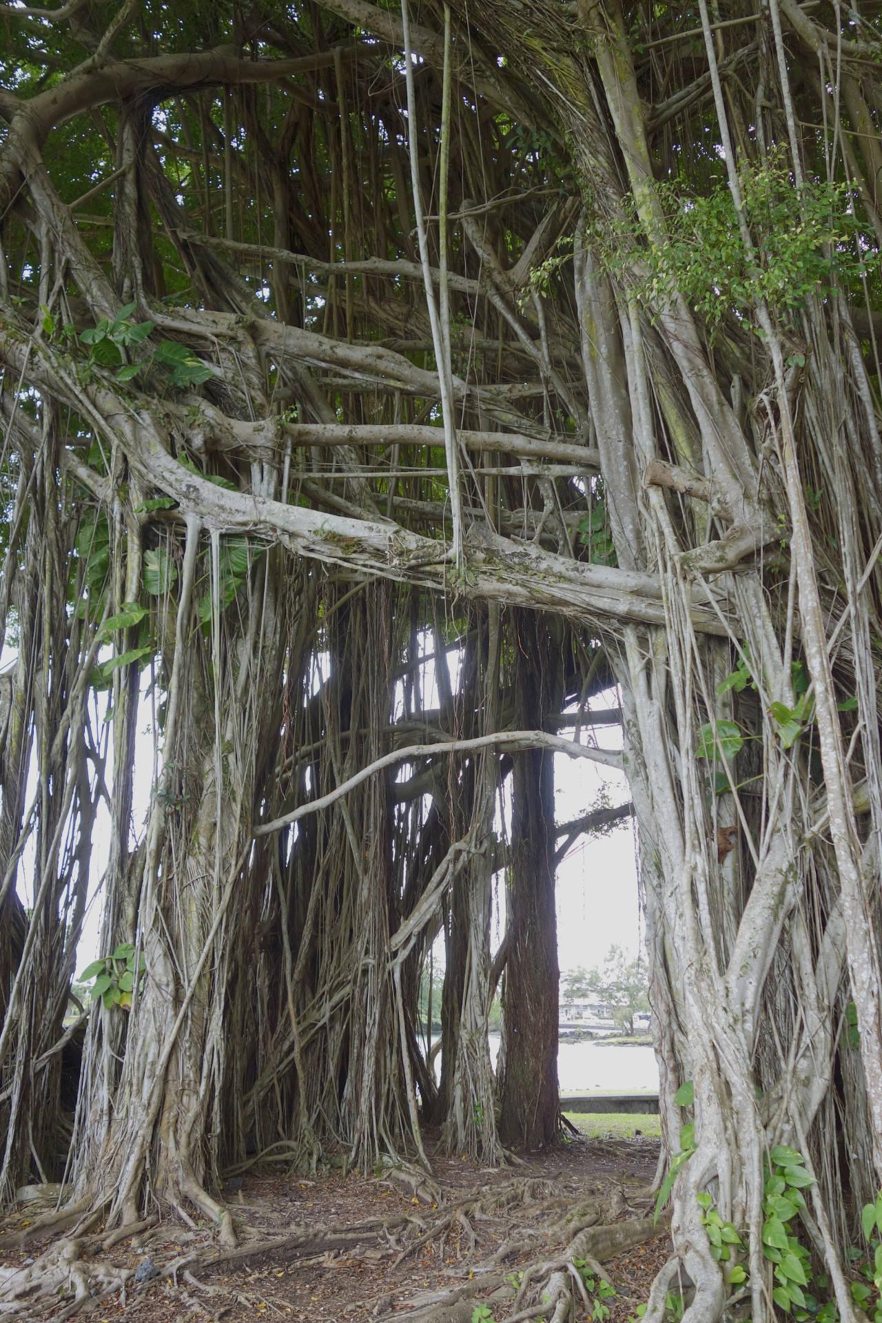 Новые вопросы о деревьях - 10