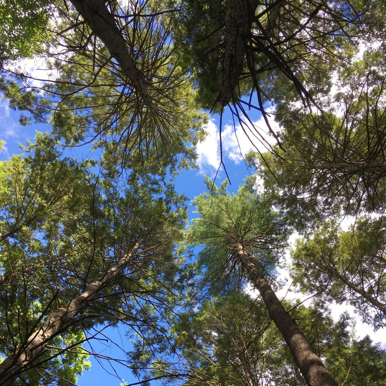 Новые вопросы о деревьях - 4