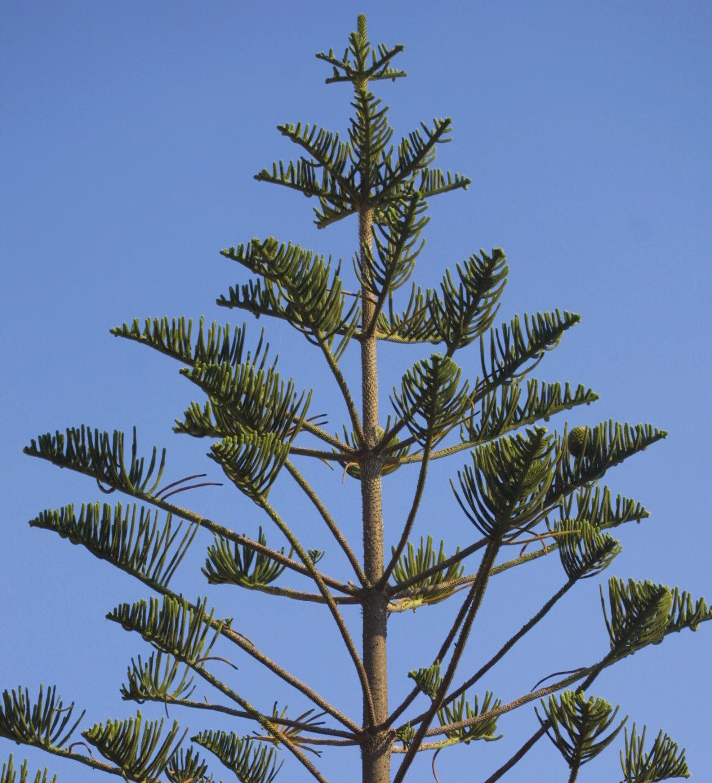 Новые вопросы о деревьях - 6