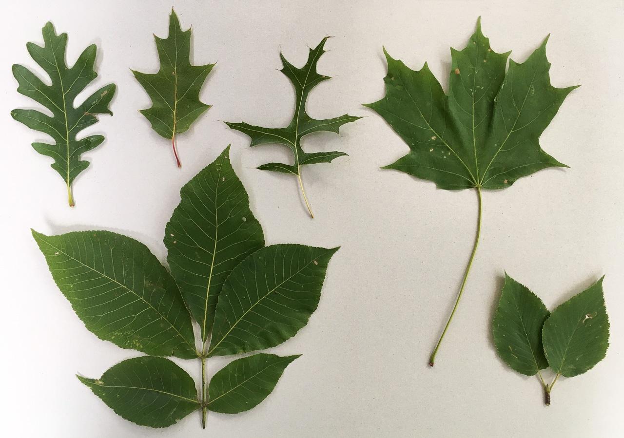 Новые вопросы о деревьях - 1