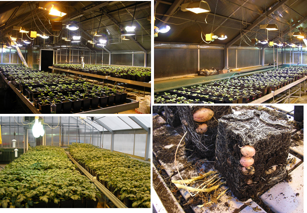 Жизнь замечательной картошки и современные технологии - 14