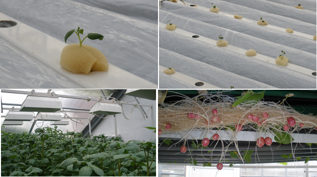 Жизнь замечательной картошки и современные технологии - 21