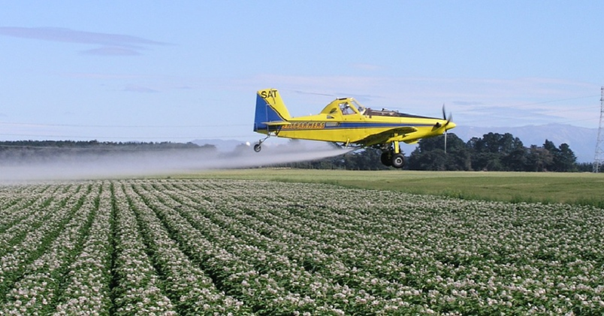 Жизнь замечательной картошки и современные технологии - 31