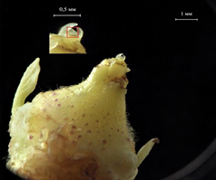 Жизнь замечательной картошки и современные технологии - 8
