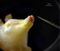 Жизнь замечательной картошки и современные технологии - 9