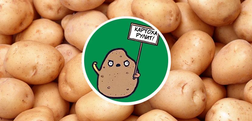 Жизнь замечательной картошки и современные технологии - 1