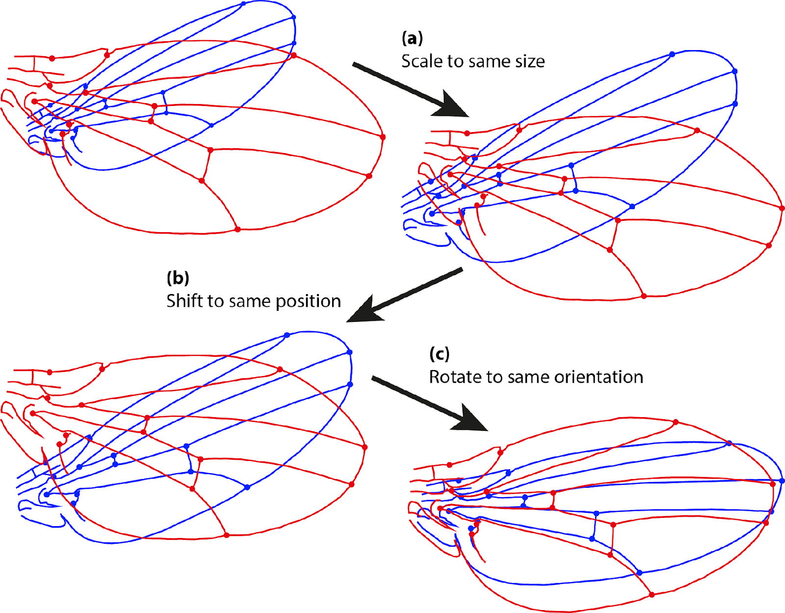 Шесть степеней свободы: 3D object detection и не только - 5