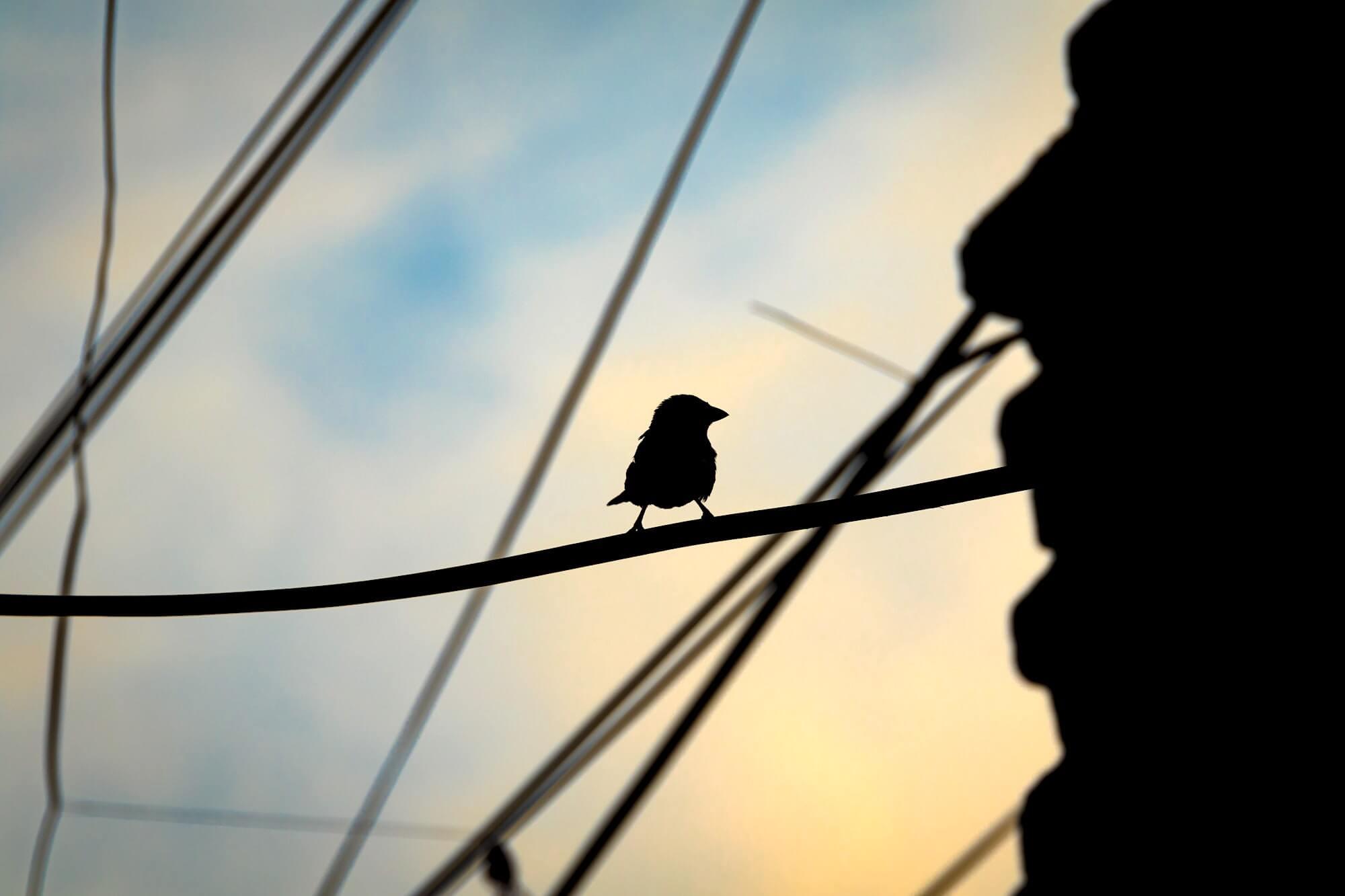 Фотография: Abdul Basit. Источник: Unsplash.com