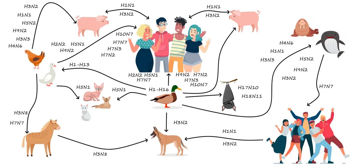 H1N1 — от испанки до наших дней: «нулевой мальчик» и пандемии - 5