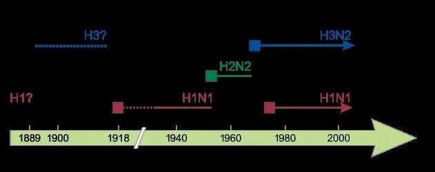 H1N1 — от испанки до наших дней: «нулевой мальчик» и пандемии - 7