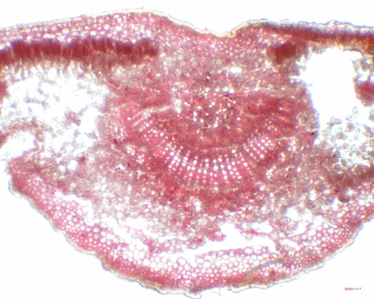 Поговорим о микроскопах - 12