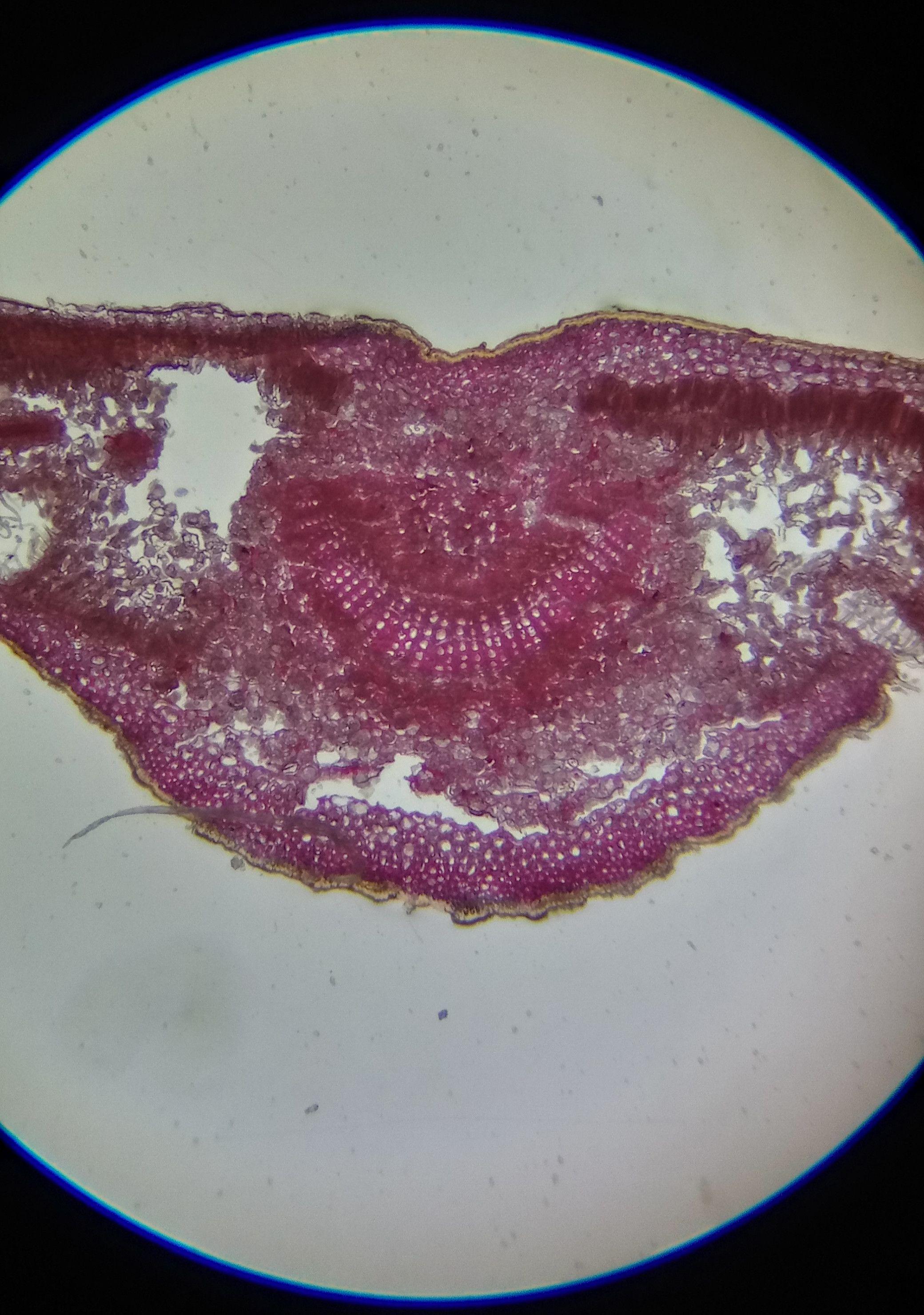 Поговорим о микроскопах - 16