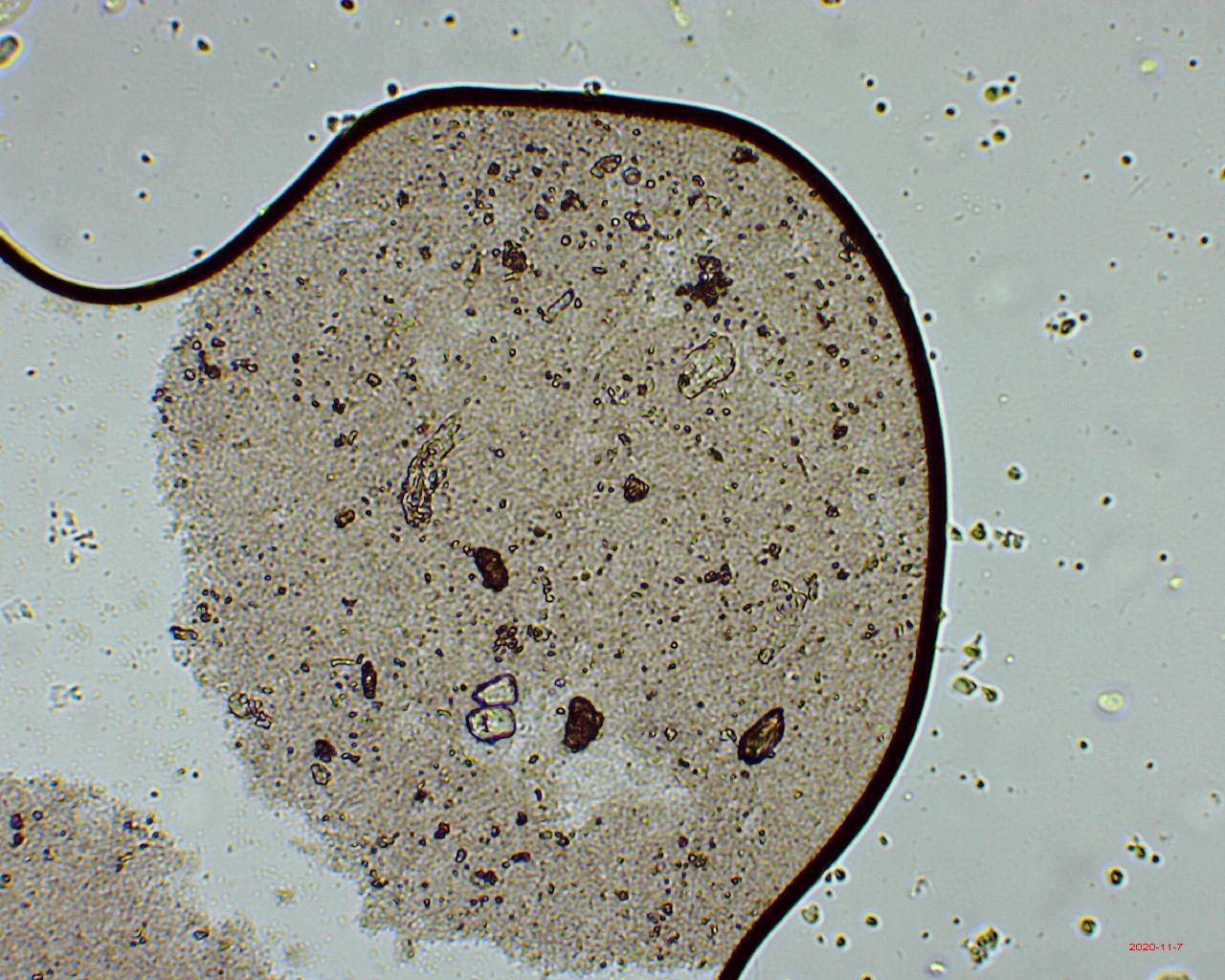 Поговорим о микроскопах - 18