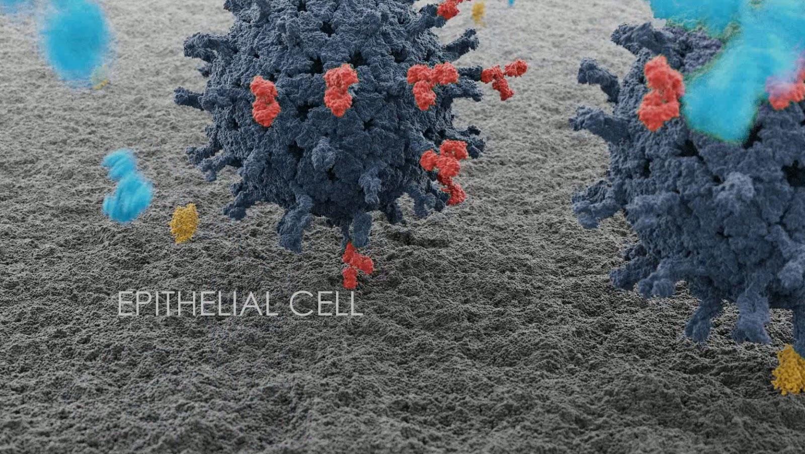 Молекулярная биология и Houdini летом двадцатого - 10