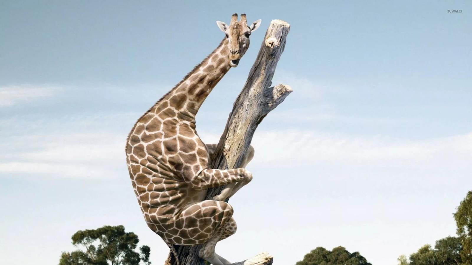 Жираф большой — ему видней. Не лучший способ отслеживать местоположение сотрудников