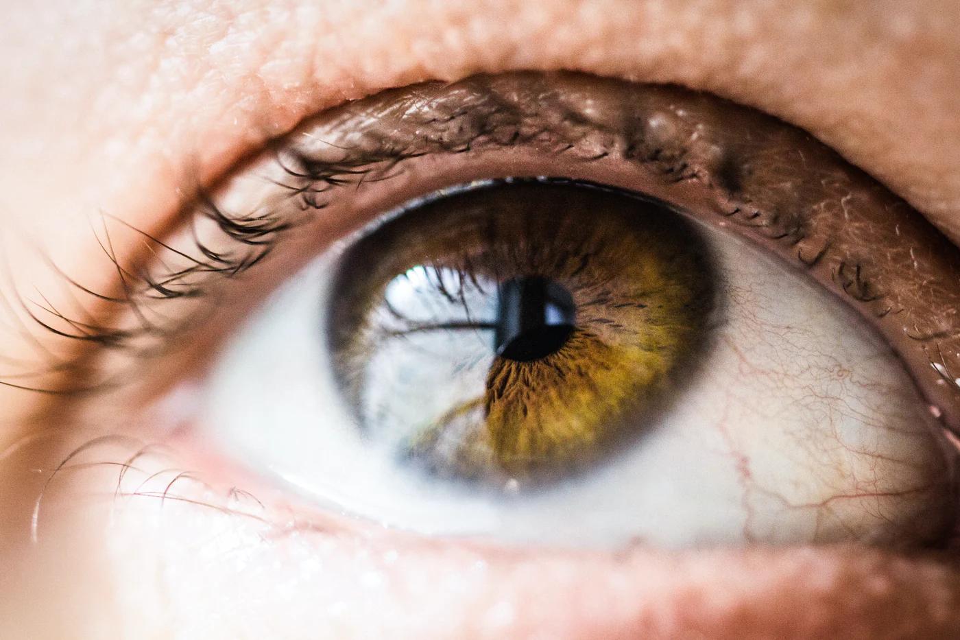 Иди и смотри: ученые научились перепрограммировать зрение - 1
