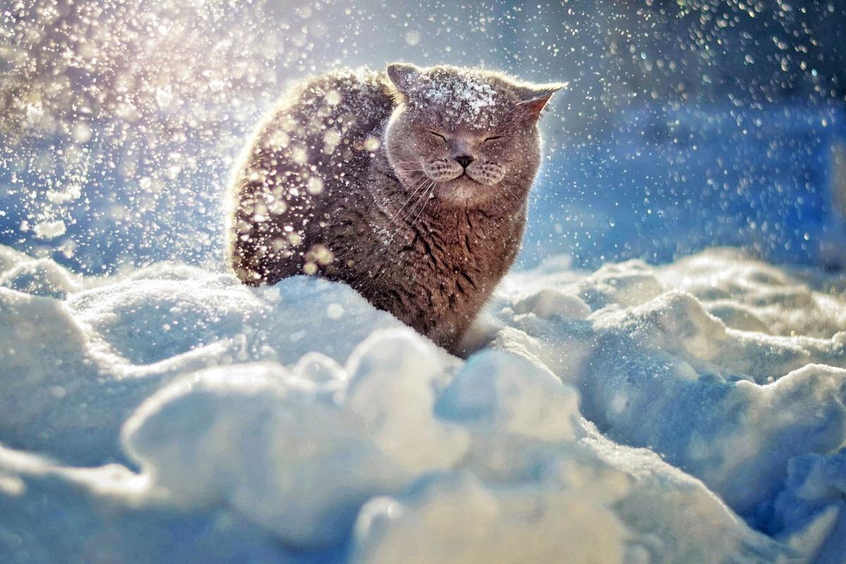 Поточный шифр SNOW - 1