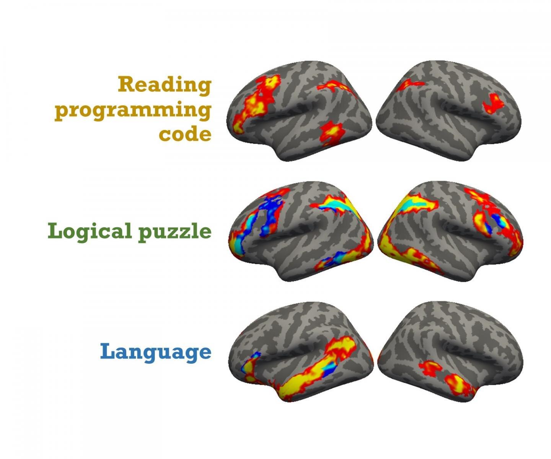 Вот ваш мозг на Питоне: исследователи расшифровали нейро-механику программирования - 1