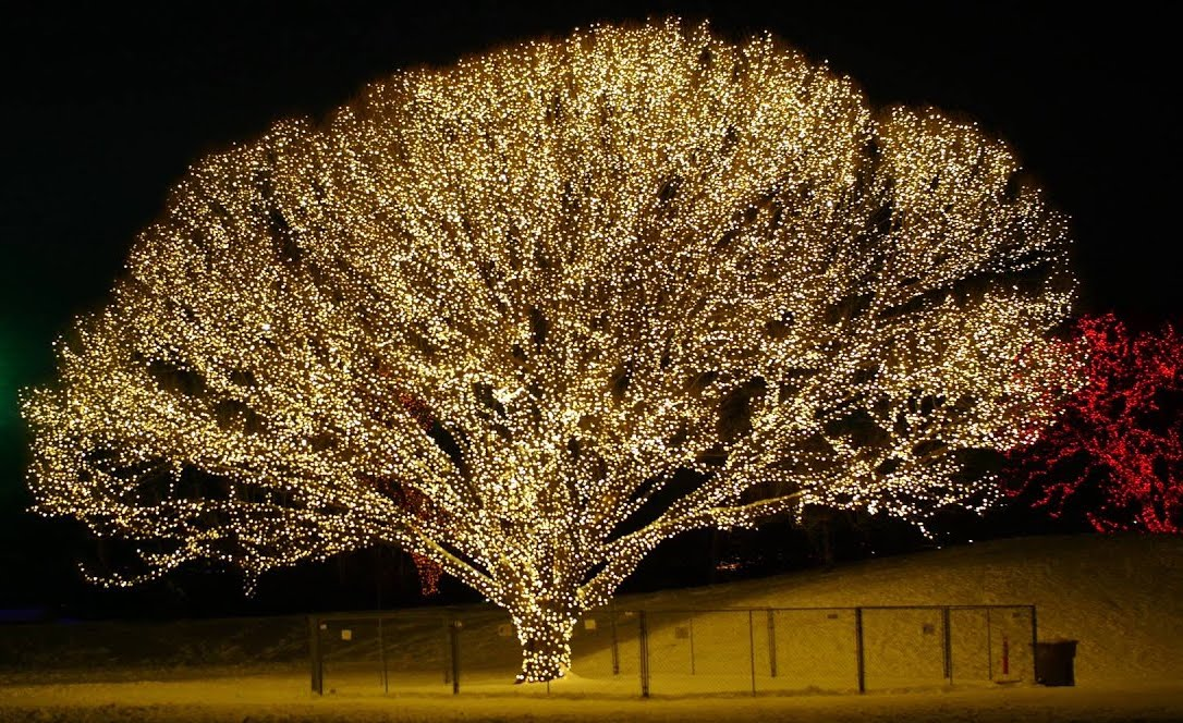 Экологически чистое освещение: люминесцентная гидрофобная древесина - 1