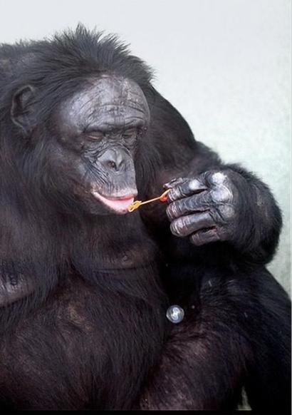 Трибьют Канзи, обезьяньему патриарху, который всех озадачил - 3